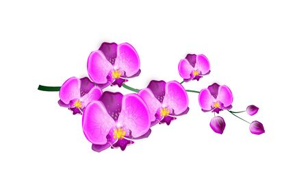 bloom: Illustration of twig with bloom of pink orchid Stock Photo