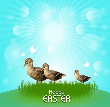 Three ducks on grass with blue sunshine background photo