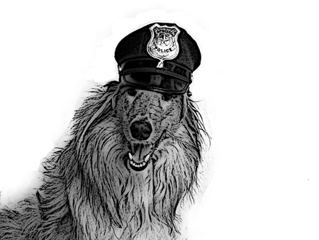gray scale: Illustration of police collie dog in gray scale