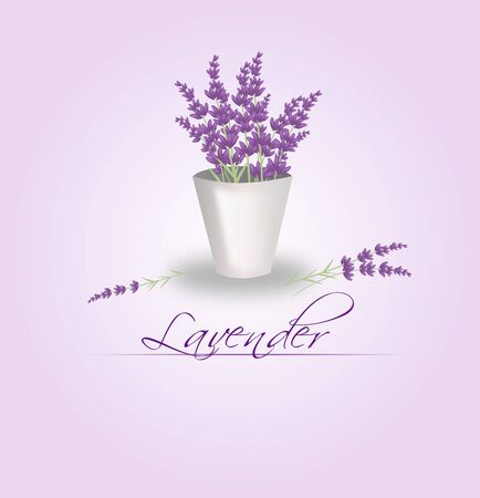tin: Illustration of lavender bunch in tin flowerpot