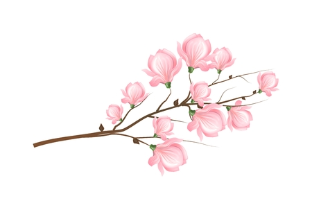 a twig: Illustration of twig of tree with light pink blossom of magnolia Stock Photo