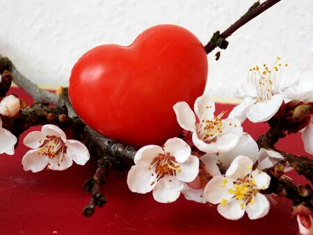 Small red heart hidden in blossom tree photo