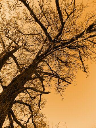 huge tree: Photo of huge tree in old orange colors Stock Photo