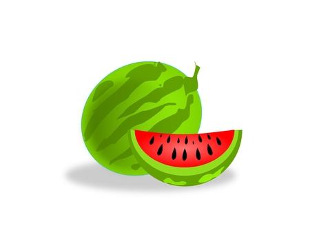 melon fruit: Illustration of melon fruit on white background