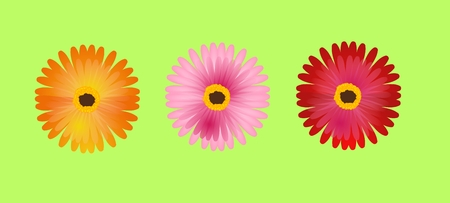 gerbera: Three different colored gerbera flowers on green background