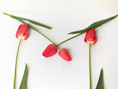 annealed: Photo of pink tulips flowers on white set to letter M Stock Photo