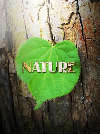 nature cure: Leaf of linden on wooden cure with text nature