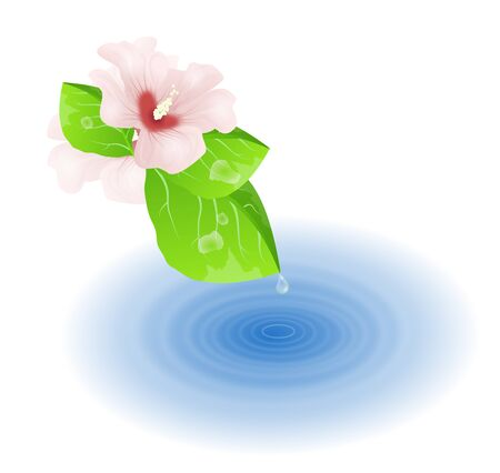 pond life: Illustration of green leaves and hibiscus with water drop falling to the water surface Stock Photo