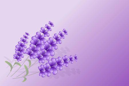 Set of four lavender illustration on light purple background Stock Photo