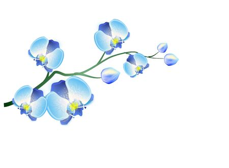 orchids: Beautiful illustration of blue orchid flower on white background Stock Photo