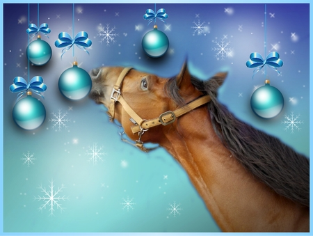 light brown: Light blue christmas greeting card with brown horse