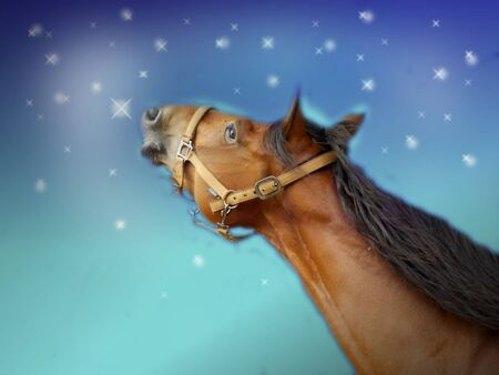 light brown horse: Brown horse head looking on light blue sky with stars Stock Photo
