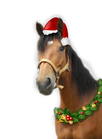 brown horse: Photo of brown horse with christmas decoration Stock Photo