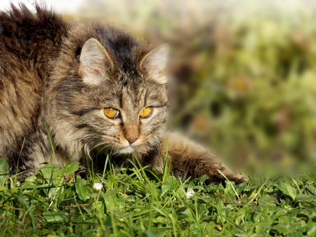 Photo of cat as creeps on grass Stock Photo