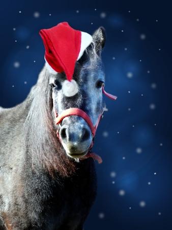 Photo of cute pony with santa hat on dark blue shiny background