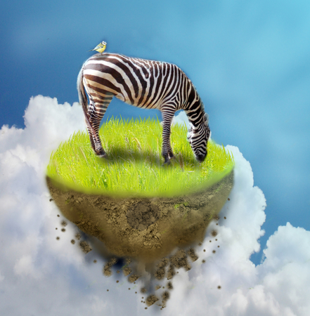 manipulate: Photo manipulation of grassing zebra on piece of flying ground Stock Photo