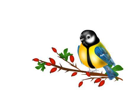 chickadee: Illustration of chickadee sitting on twig of rose hip Stock Photo