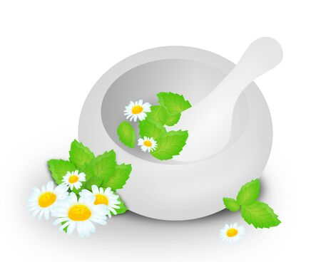 blooms: Illustration of white mortar with mint leaves and chamomile blooms Stock Photo