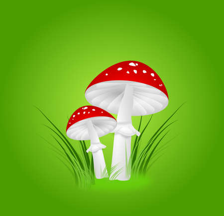 food poison: Illustration of two toadstools in grass on green background