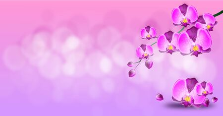 flower banner: Light pink horizontal background with purple orchid flowers Stock Photo