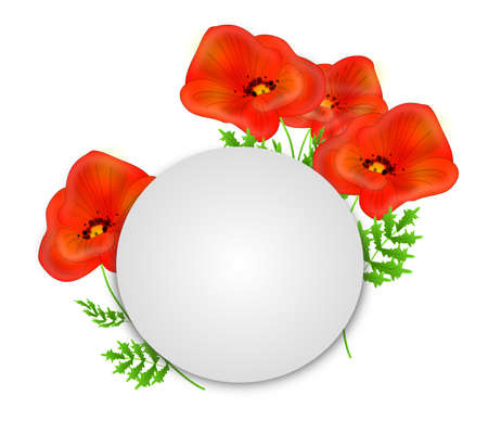 poppies: Beautiful red poppies illustration on white background with blank white circle for your text