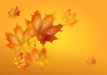 Illustration of yellow autumn background with dry leaves decoration