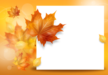 dry leaves: Beautiful autumn background with dry leaves decoration and white board