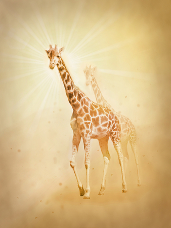 Photo manipulation of two giraffe in desert