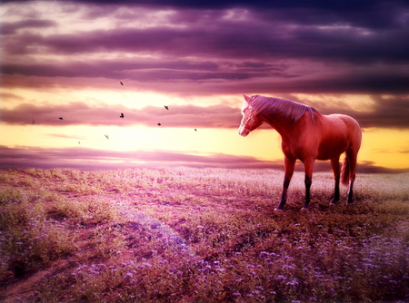 Photo manipulation of romantic scenery with brown horse