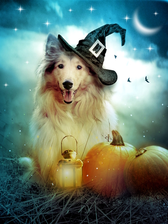 Collie dog with witch hat decorated with halloween pumpkins Stock Photo