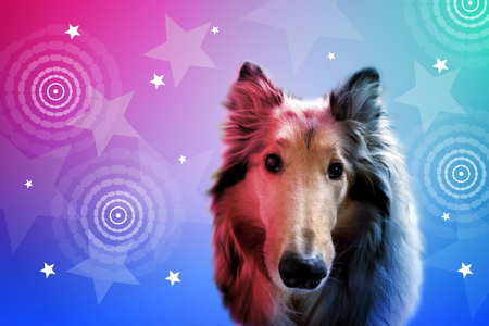 Dog with colorful background decorated with stars 写真素材
