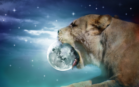 Photo manipulation of lion of eating shining moon Stock Photo