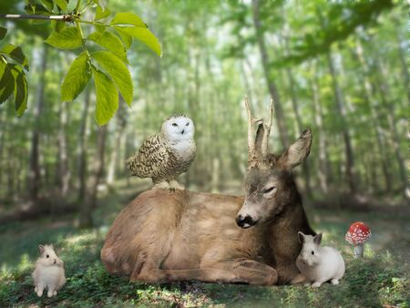 Beautiful scenery of deer in forest by summer day