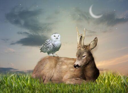 Hirsche legen sich abends auf Gras grass Standard-Bild