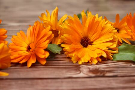 Photo of marigold on wooden background in detail