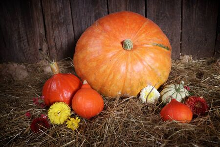 Photo of pile of decoration pumpkins with autumn flowers
