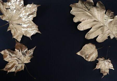 Gooden autumn leaf on black background photo