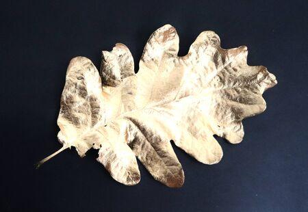 Gooden oak leaf on black background photo