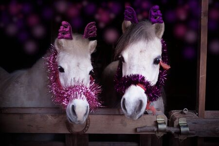 Photo of two horses in christmas time with christmas decoration Zdjęcie Seryjne