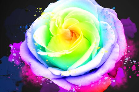 colorful rose foower set of rainbow colors