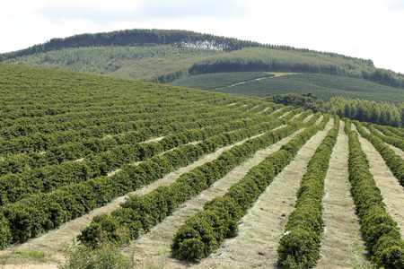 Bekijk boerderij met koffieplantage Stockfoto