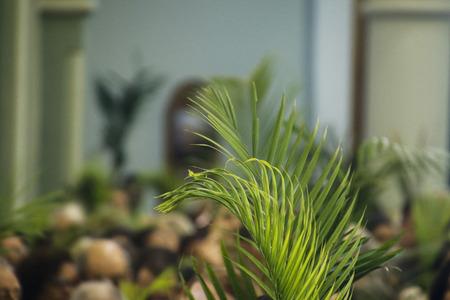 Heilige Woche. Traditionelle katholische Feier Palmsonntag. Christlicher Glaube.