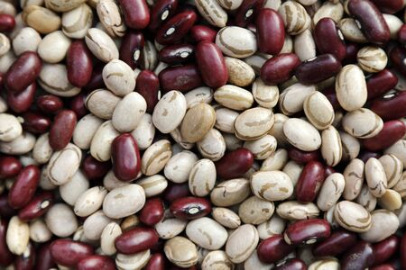 various grains of crude red and white beans - bean texture - food
