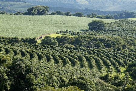 View farm with coffee plantation - Farm coffee plantation in Brazil - Cafe do Brasil Imagens - 136452870