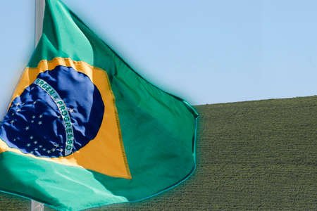 View farm with coffee plantation - Farm coffee plantation in Brazil - Cafe do Brasil