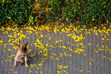 dog animal portrait sitting on yellow tree leaves