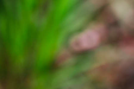 defocused abstract scene background in shades of green Imagens