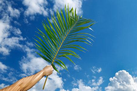 hand holding branch with blue sky background at Palm Sunday celebration. Holy Week. Traditional Catholic celebrate Palm Sunday. Christian faith.