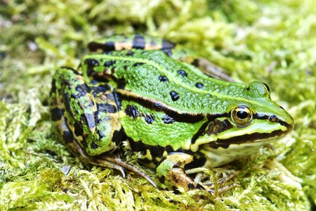 insectivores: Frog Stock Photo