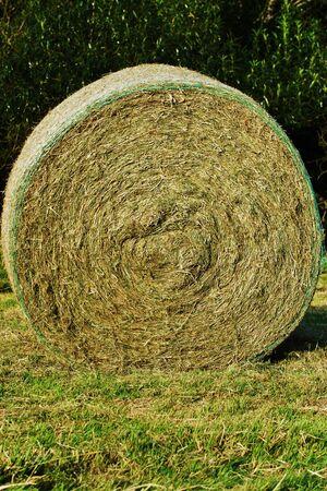 Straw Bales photo